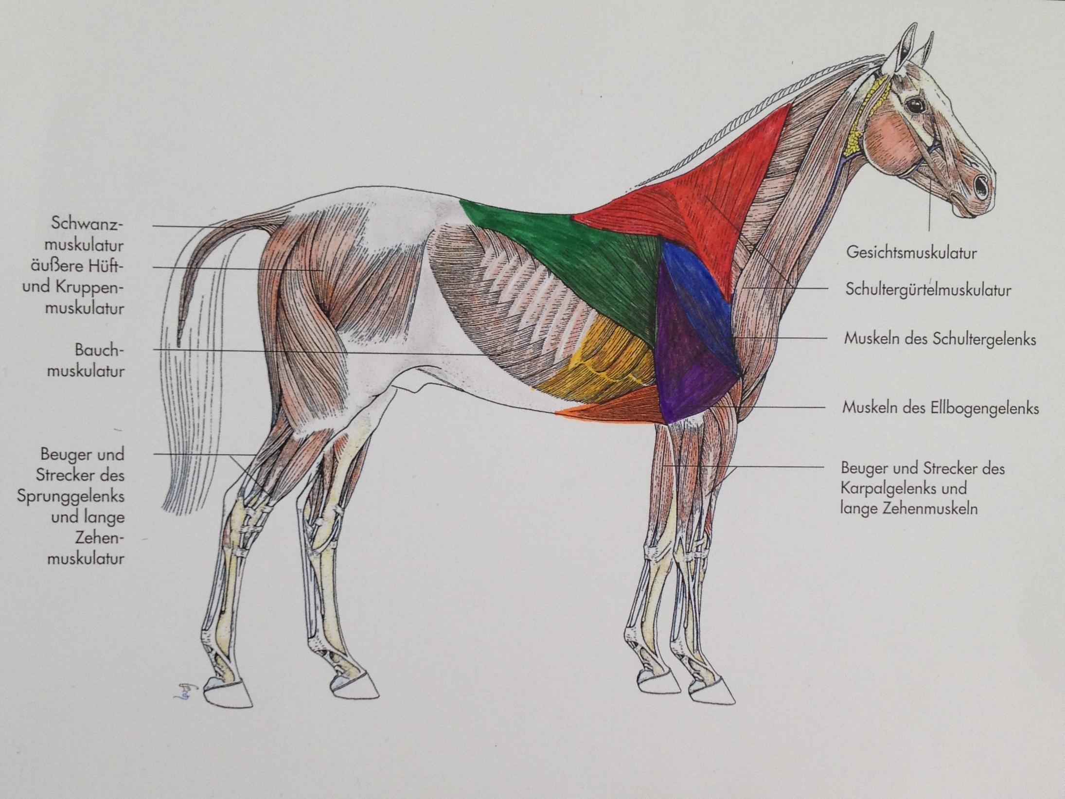 pferd nackenband verletzt